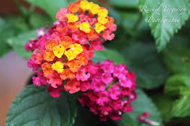 Low Maintenance Plants And Flowers - 8 beautiful low maintenance garden flowers simplemost