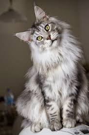 4040 best cats in art images on pinterest animals kitty cats