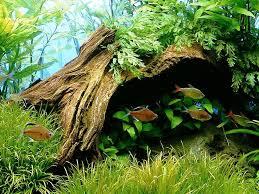 Aquascape Tank Best 25 Tropical Aquarium Ideas On Pinterest Freshwater Fish
