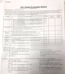 dna replication activity worksheet free worksheets library