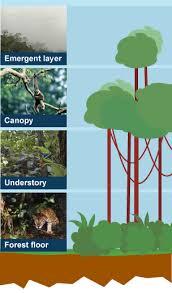 Adaptations Of Tropical Rainforest Plants - bbc bitesize ks3 geography tropical rainforest biomes revision 1