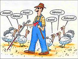 happy thanksgiving jokes for wishing all friends giikers