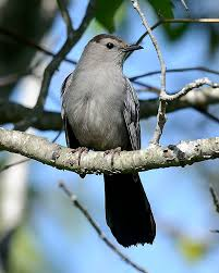 New England Backyards by Consider The Catbird The Surprising Secrets Of A Common Backyard
