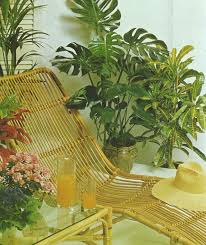 Cascading Indoor Plants by The Complete Book Of Houseplants U0026 Indoor Gardening 1979 Living