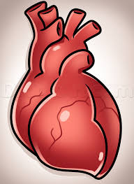the human heart for kids human anatomy lesson