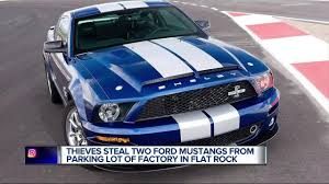 mustangs the rock thieves two ford mustangs from parking lot of factory in