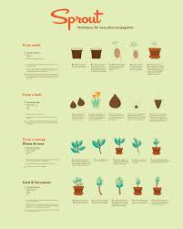 propagating native plants sprout is a how to diagram of easy plant propagation for beginners