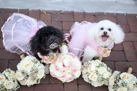 best dogs poodles minnie and winnie daily dog tagdaily dog tag
