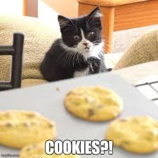 Chions League Meme - kittens imgflip