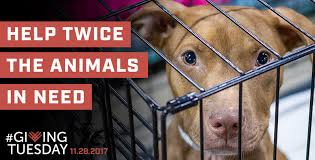the impact of your support american humane