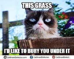 Cat Internet Meme - 56 best happy birthday cat meme images on pinterest happy birthday