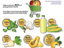 Genetically Modified Organisms Ppt Video Online Download