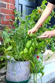 Fall Vegetables Garden by How To Start A Fall Garden In A Hot Southern Climate U2014 Seedsheet