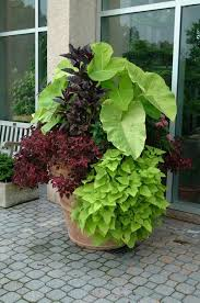 best 25 potted plants ideas on pinterest outdoor potted plants