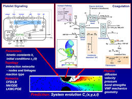 systems analysis of thrombus formation circulation research