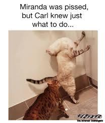 Meme Carl - carl knew just what do do funny cat adult meme pmslweb