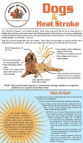 what causes seizures in dogs what you can do