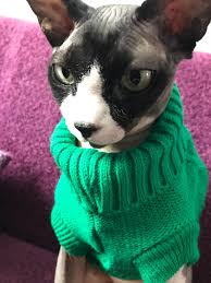 sphynx sweaters mpk 10 years swa cat sweater sweater for cats and small dogs