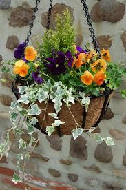 best 25 winter hanging baskets ideas on pinterest hanging