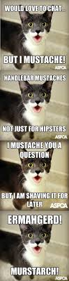 Handlebar Mustache Meme - lolcats mustache lol at funny cat memes funny cat pictures