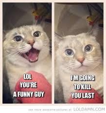 Cats Memes - cat memes dump album on imgur