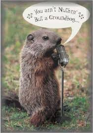 Groundhog Meme - you ll be singing the blues if a groundhog aka woodchuck gets into
