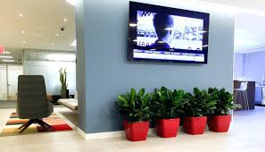 office design cool office plants cheap office plants cheap