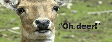 Oh Deer Meme - someone found a frozen dead deer next to the road and decided to