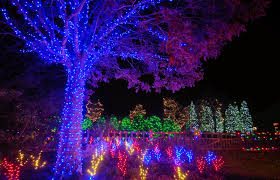 winter lights dazzle the n c arboretum