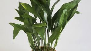 Tropical House Plants Names - common house plants sunset