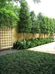 Ideas For Backyard Privacy Breathtaking Landscaping Privacy Ideas Contemporary Best Idea