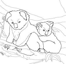 mother baby koala coloring free printable coloring pages