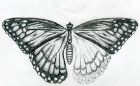easy butterfly drawings jus 4 kidz