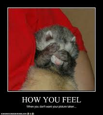 Ferret Meme - it s national ferret day gallery ebaum s world