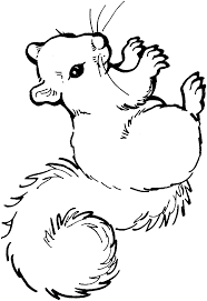 squirrel coloring pages 1223