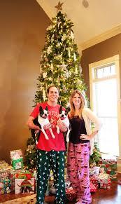 miley and howie boston terrier christmas 2012 1 kevin u0026 amanda