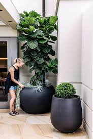 best 25 black planters ideas on pinterest large leaf plants