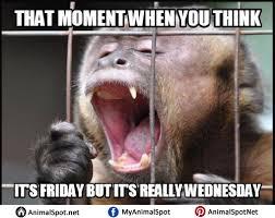 Monkey Meme - monkey meme png