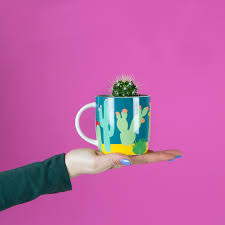 7 unique ways to decorate your home with cacti