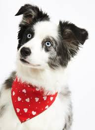 bandanas for dogs designer bandanas at chelsea dogs