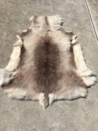 Reindeer Hide Rug Rugs In Geelong Region Vic Rugs U0026 Carpets Gumtree Australia