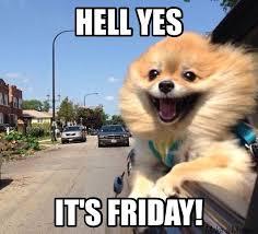 Pomeranian Meme - best 25 pomeranian memes ideas on pinterest cute funny animals
