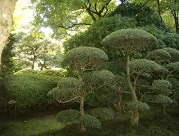 japanese garden plants uk margarite gardens