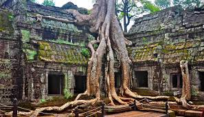 trees at the cambodian temple of ta prohm growing out of the