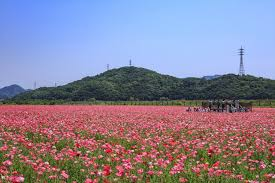 kasaoka bay farm flower garden okayama prefecture official