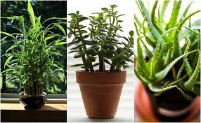 practically immortal houseplants that even you can u0027t kill