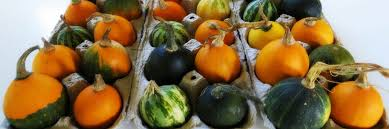 prolong the of decorative pumpkins gourds and squash in five