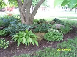 Backyard Trees For Shade - shade garden under magnolia tree our garden photos pinterest