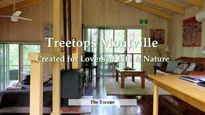 sydney the hills treetops sydney treetops accommodation montville romantic rainforet and seaview