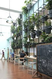 low light plants for office office design office pot plants best 25 office plants ideas on